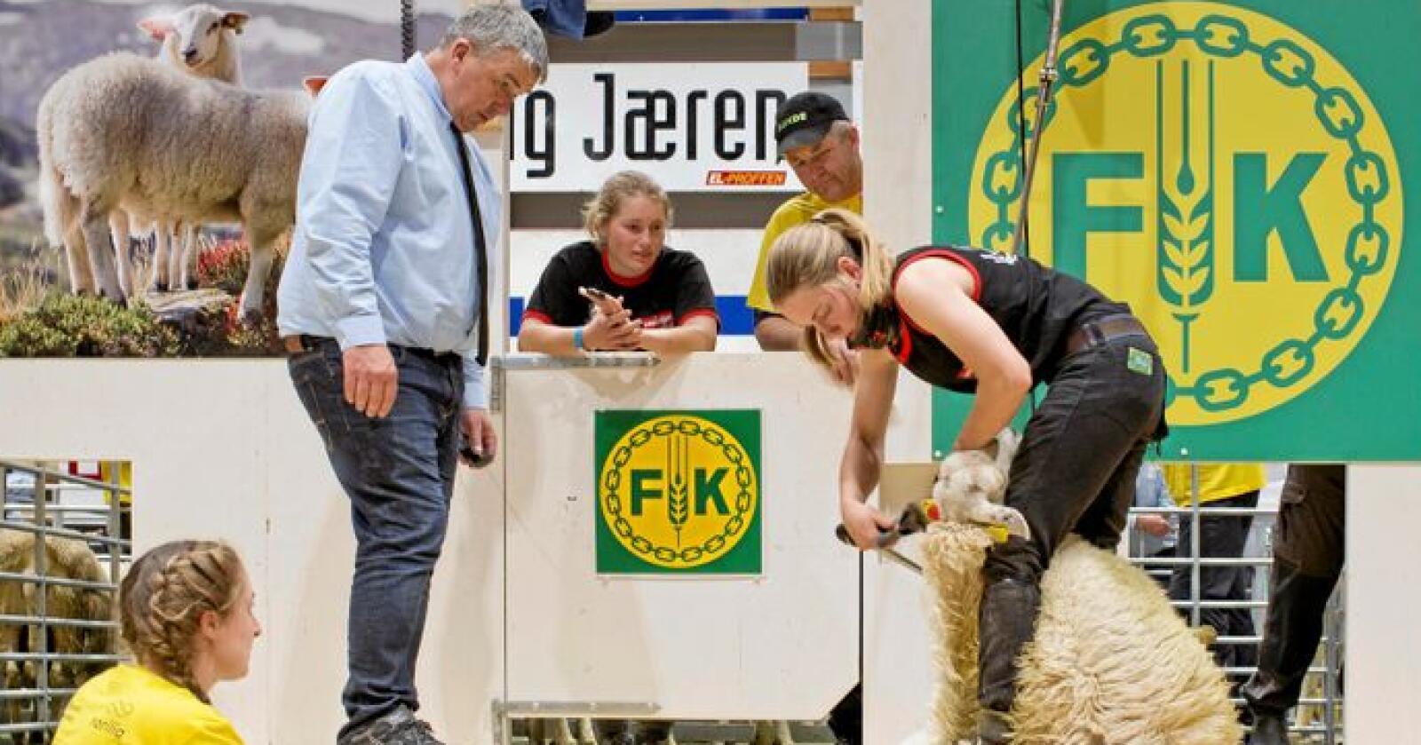 Inga Lill i aksjon i seniorfinalen. Søsteren Ruth Jane hjelper tilmed å få sauene inn og følger nøye med på klippingen sammen med dommere og ullhåndterer. Foto: Solfrid Sande