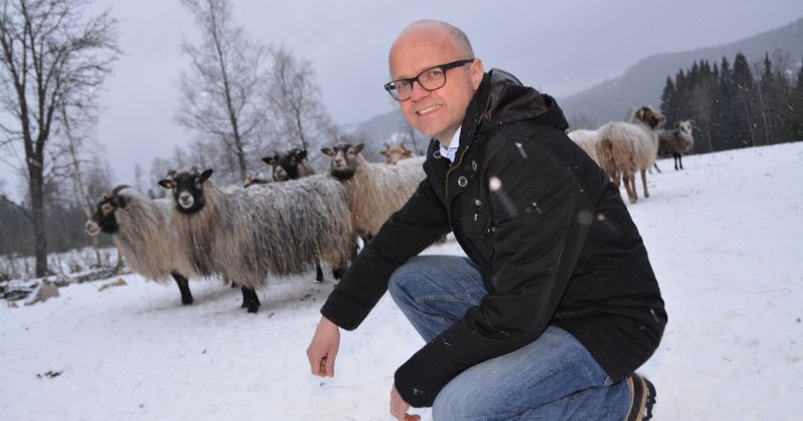 Klima- og miljøminister Vidar Helgesen (H) vil undersøke om ulvene tilhører de to flokkene før han eventuelt gir ny fellingstillatelse. Foto: Anders Sandbu