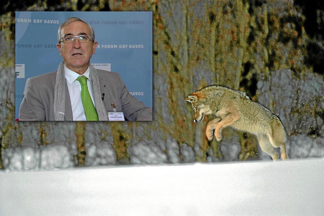 Fleksibel beskytter: Eladio Fernández-Galiano har ansvaret for å passe på at store rovdyr beskyttes etter Bernkonvensjonen. Han sier det avgjørende er om ulvestammen er truet, noe han ikke mener den er i Norge. Foto:  Staffan Widstrand / Youtube