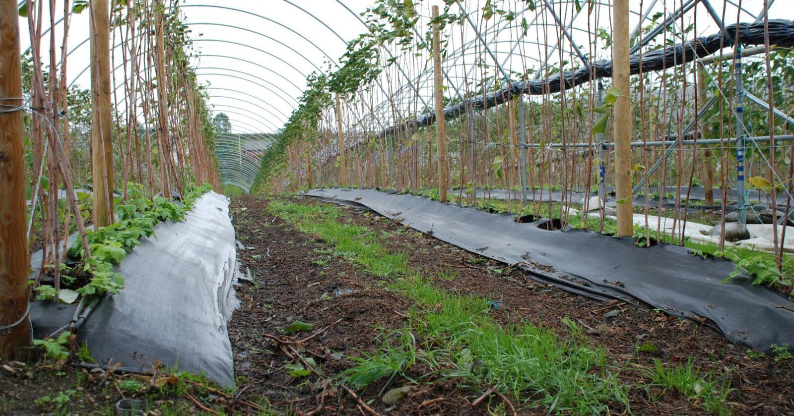 Må finne hverandre: Vi oppfordrer nå både de som mangler arbeidskraft og de som kan ta seg en jobb i landbruket om å bruke de kanaler som finnes, skriver Landbruks- og matdepartementet. (Arkivfoto: Karl Erik Berge)