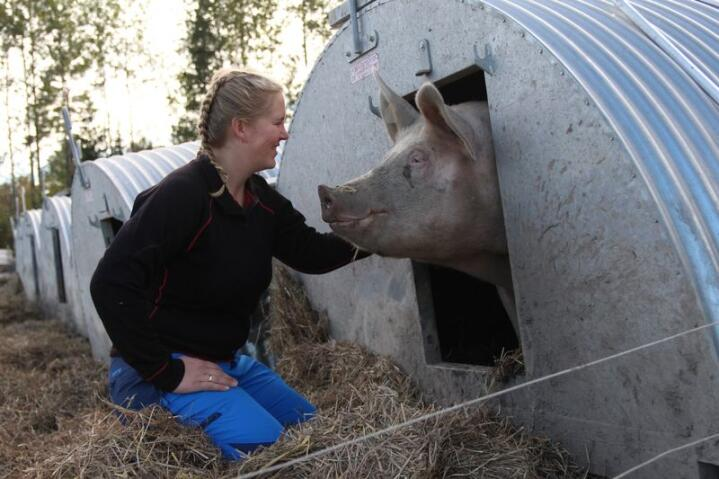 Da Anne-Helene Sommerstad Bruserud skulle ta over grisehuset til faren, innså hun at endringer måtte til. Løsninga ble å flytte 30 purker og tilhørende slaktegris ut i skogen. Foto: Kristin Bergo