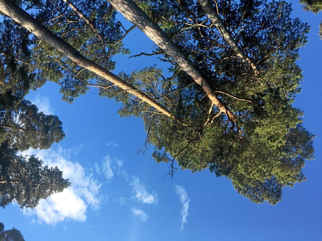 Klimakamp: Vi trenger produkter fra skogen og verdiskapingen skogen gir, skriver Hans Asbjørn K. Sørlie i Norges Skogeierforbund. Foto: Mariann Tvete