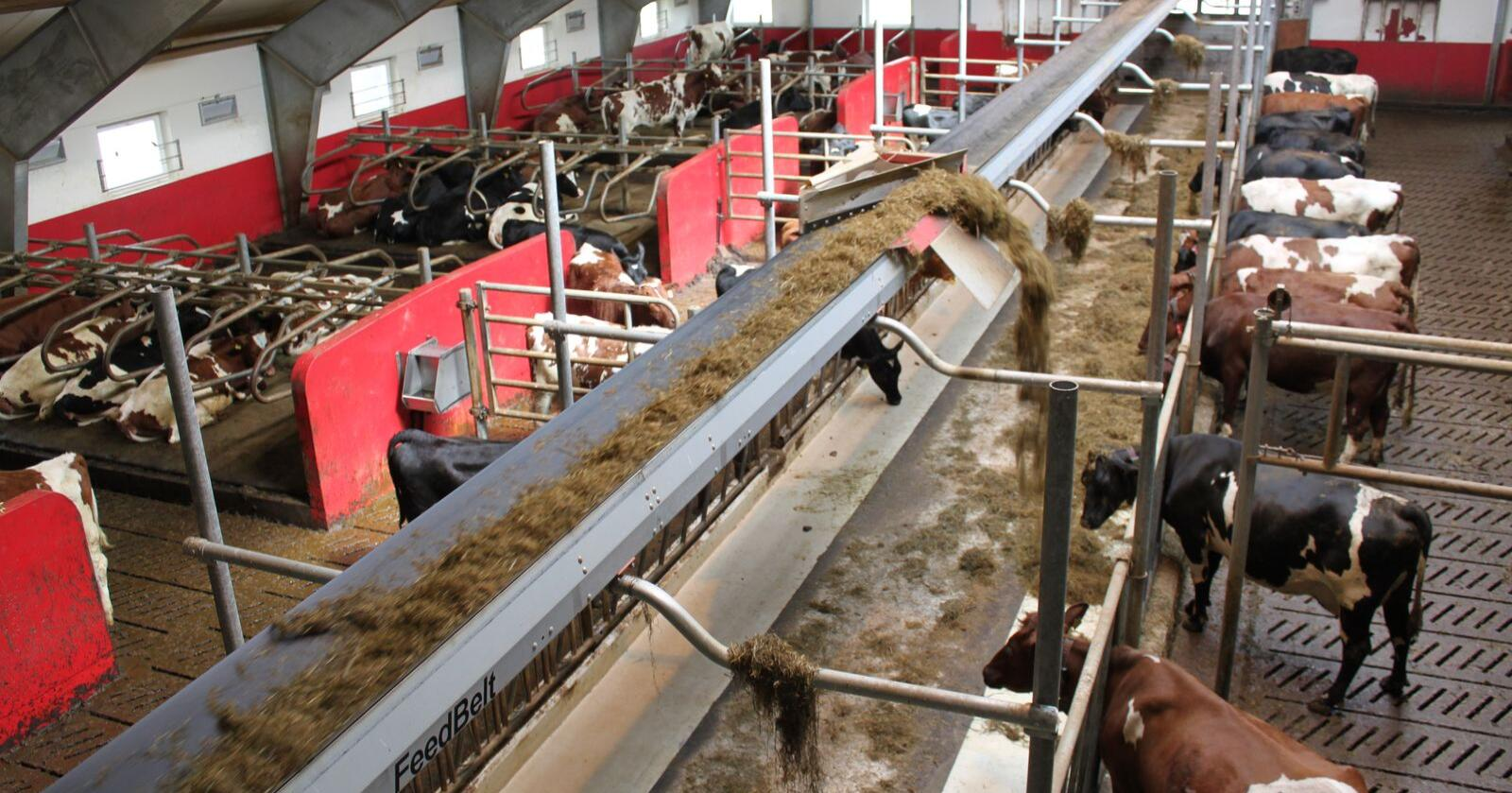 TKS FeedBelt: Med båndfôring i taket kan man krympe fôrbrettet ned mot én meter, dersom man legger ut på en side av båndet. Foto: Dag Idar Jøsang