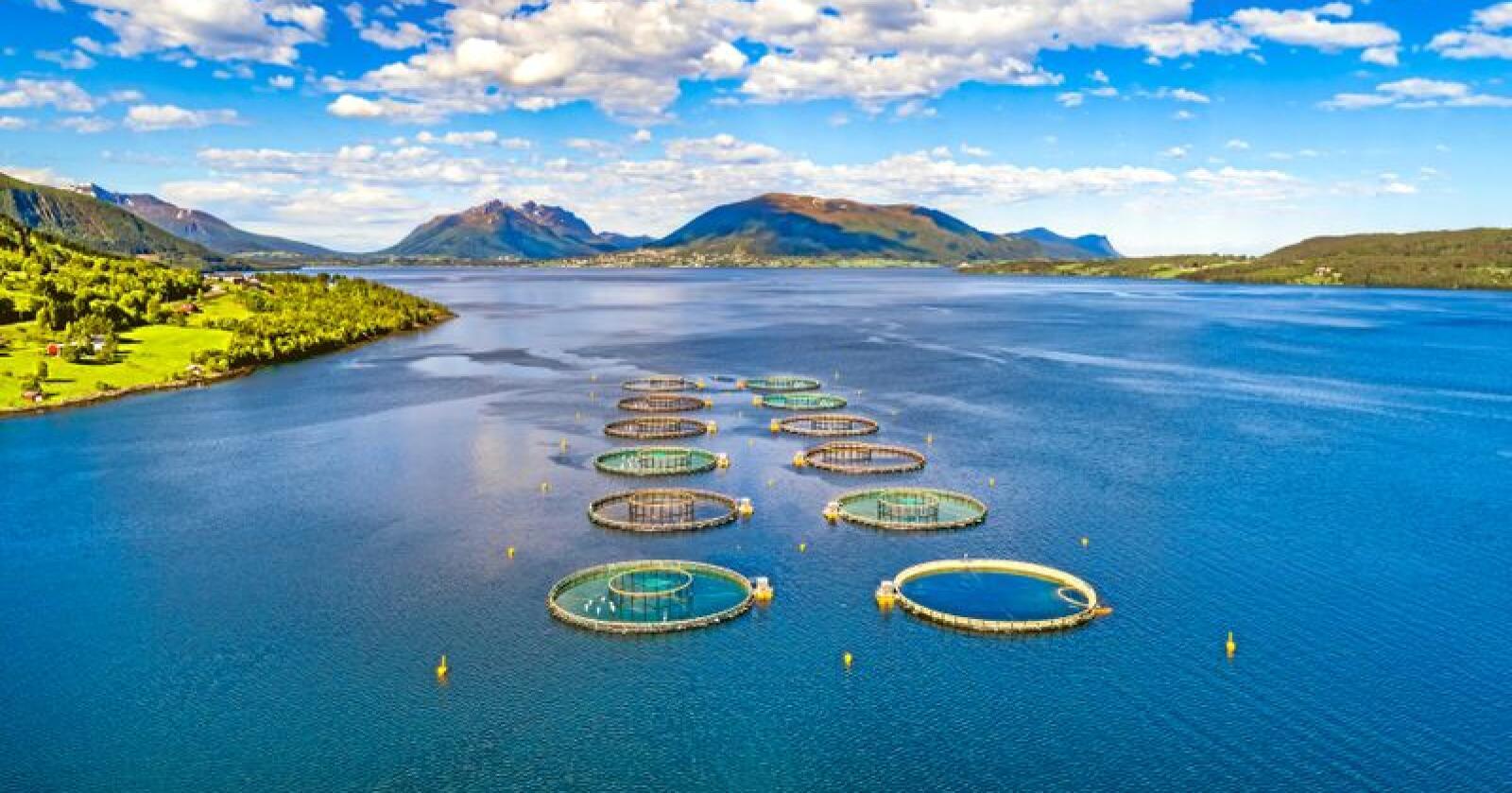 Ikke olje: Fiskeoppdrett.  Foto: Andrey Armyagov / Mostphotos