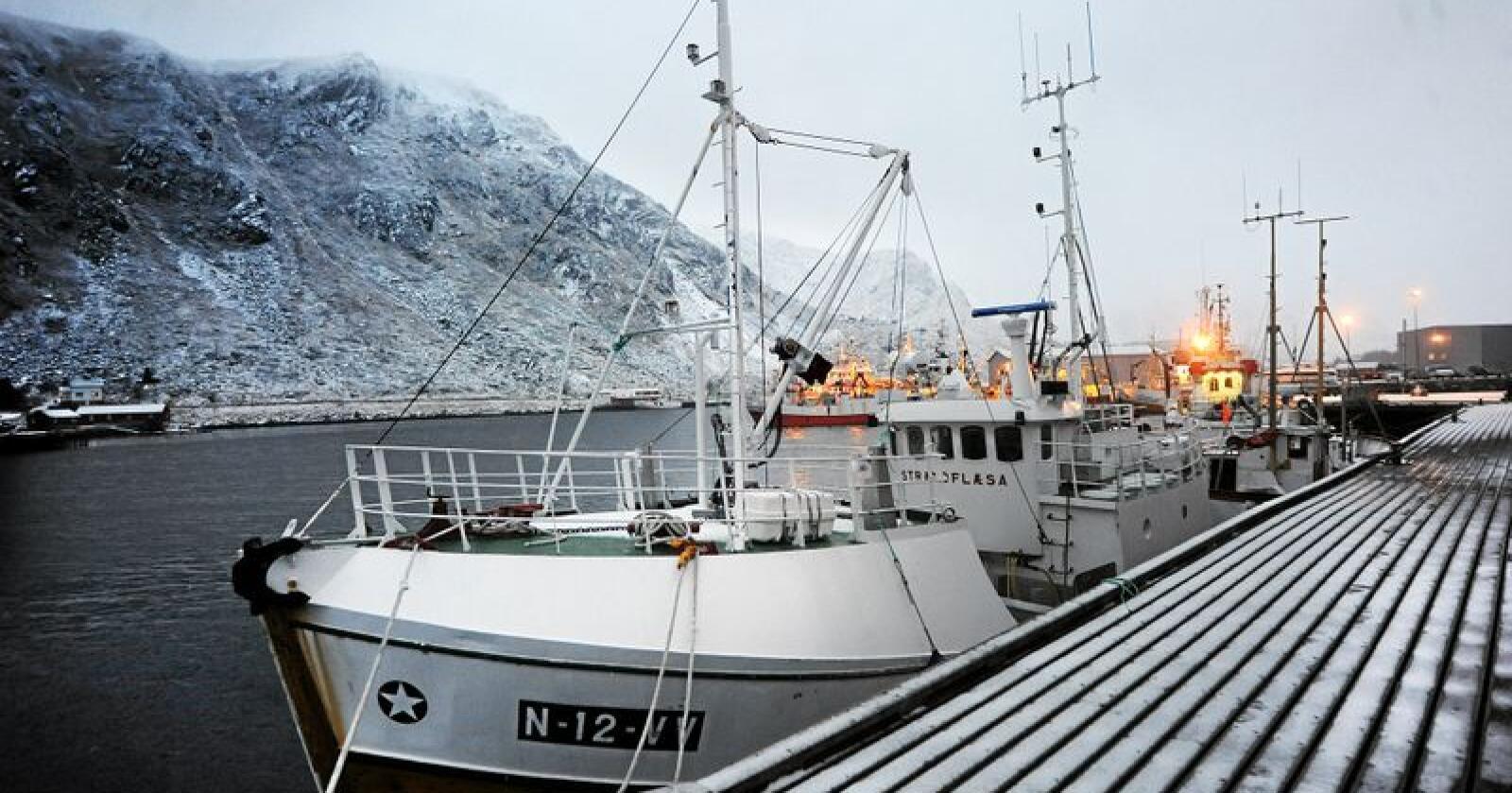 Fiskebestanden vil bli redusert som følge av klimaendringene, ifølge ny FN-rapport. Foto: Siri Juell Rasmussen
