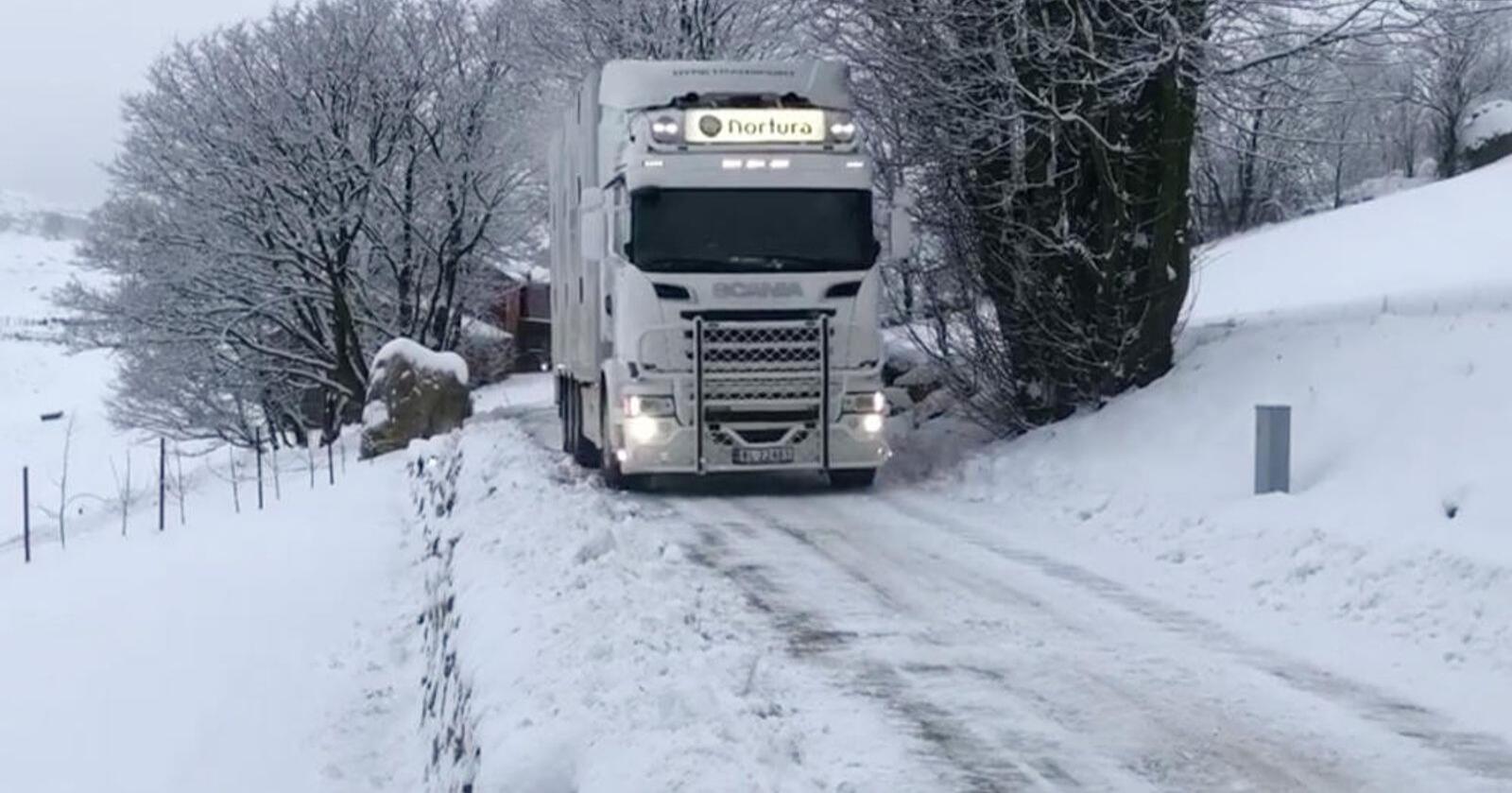 KJELKETE: Store og lange dyrebiler trenger enda bedre tilrettelegging vinterstid. Foto: Nortura