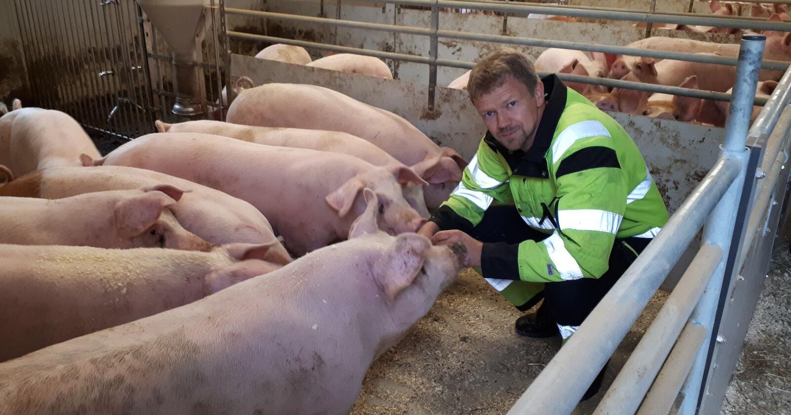 Jostein Sørhus har tre tomme rom i grisehuset. Han mener konsesjonsgrensa bør økes midlertidig i dagens situasjon. Bondelagsleder Lars Petter Bartnes advarer. – Dersom det settes opp en brakkerigg ved en skolebygning, har den en tendens til å bli stående i 20 år, sier han. (Foto: Privat)