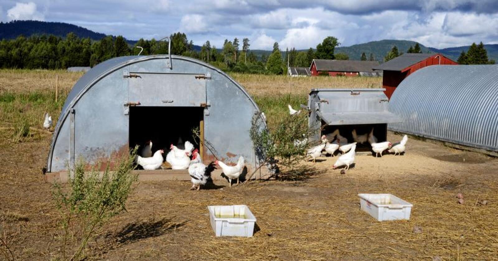Dette bildet er fra Virgenes gård, andelsgård i Vestfold drevet av Tore Jardar J Wirgenes. Foto: Mariann Tvete