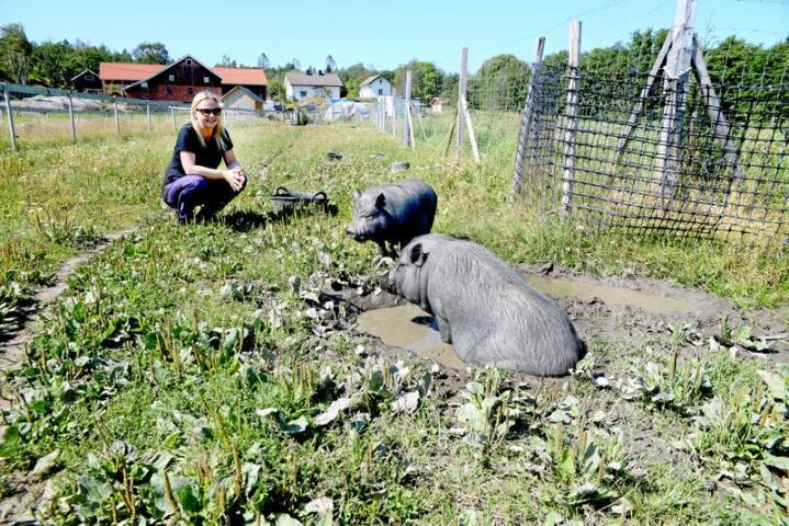 Minigrisene til Anette Westgaard (38) elsker å bade i søla. Hun dusjer de gjene med hageslangen på de varmeste dagene. Foto: Mariann Tvete
