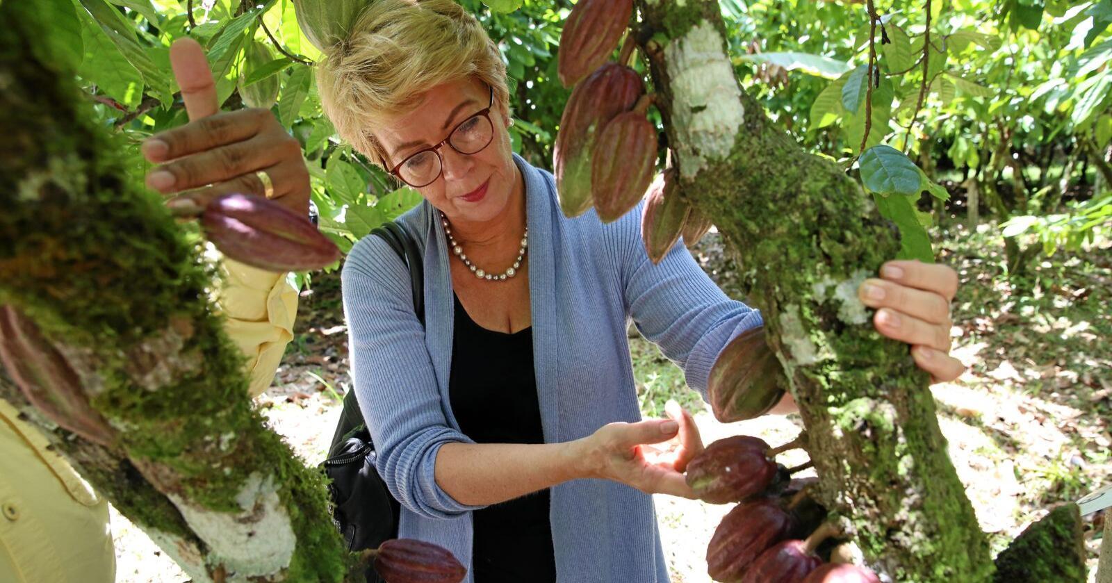 Matforsyning: Åslaug Haga, som er i leiargruppa for FNs fond for jordbruksutvikling, seier den globale matforsyninga har store utfordringar. Koronapandemi og endring i klimaet bør ifølgje Haga føre til ny debatt om styrka matberedskap. Her frå eit besøk i Cocoa Genbank (ICGT) i Trinidad. Foto: Crop Trust