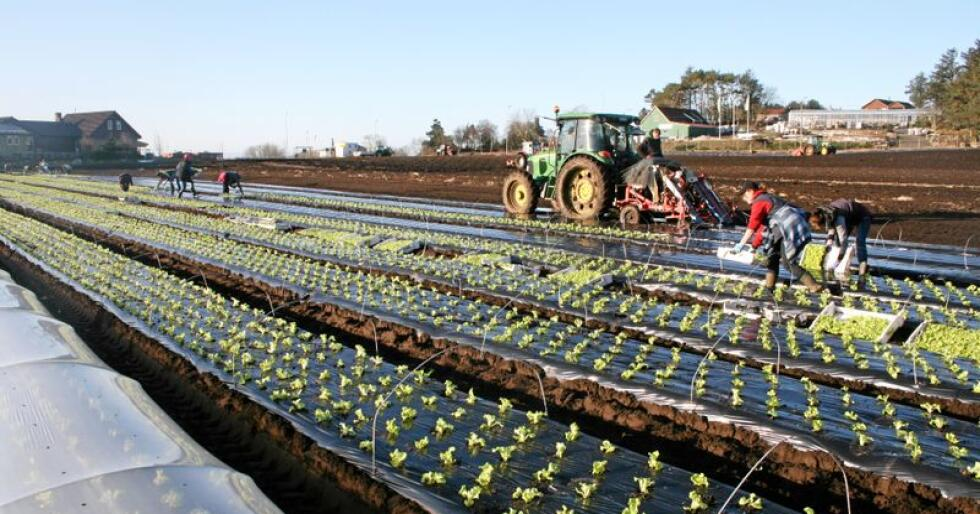Organisasjonene vil ha mer penger til produksjonen av frukt og grønnsaker i Norge. Foto: Bjarne Bekkeheien Aase