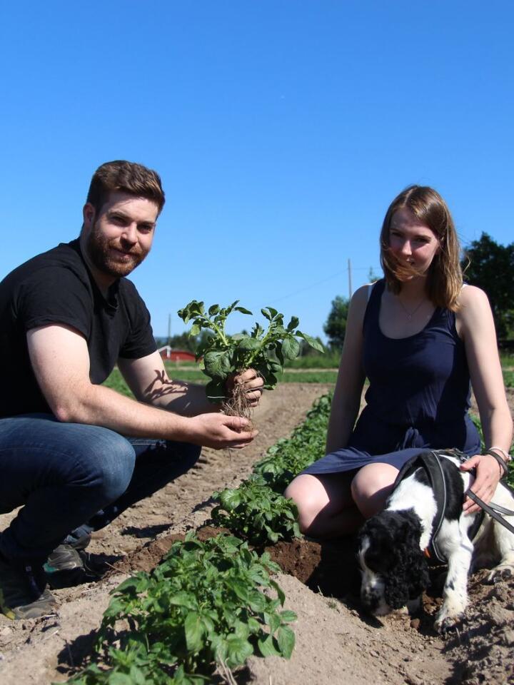 SNART KLARE: Amund og Thea er begge svært aktive i potet- og kornproduksjonen på Tømte gård. De regner med å tar over gården og drifta for fullt om et par år.