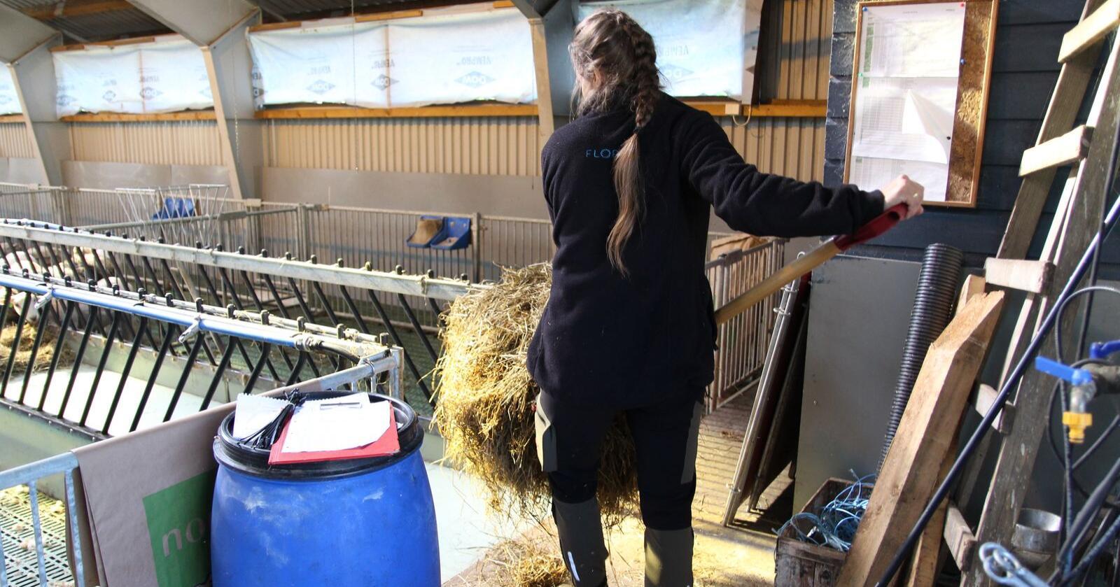 For dårleg: Velferdsordningane i samband med svangerskap, fødsel og foreldrepermisjon må bli betre, meiner ei gruppe mjølkebønder i Møre og Romsdal. (Illustrasjonsfoto: Kristin Bergo)
