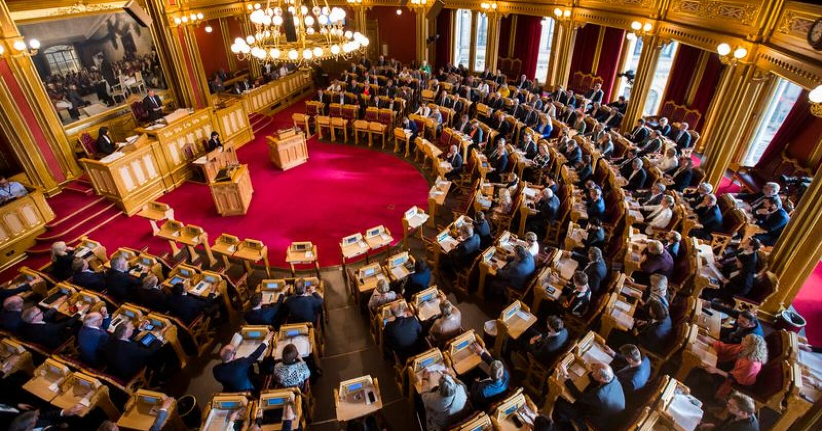 Et fullsatt Storting skal torsdag vedta å legge ned pelsdyrnæringen. Foto: Heiko Junge / NTB scanpix