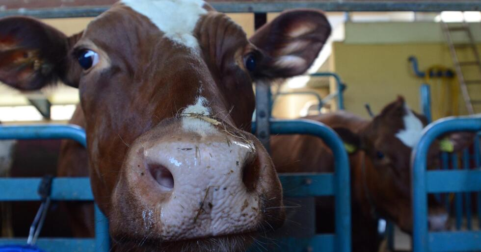 PRISFALL: Prisen på melkeprodukter falt kraftig fra juni til juli. (Foto: Liv Jorunn Denstadli Sagmo)