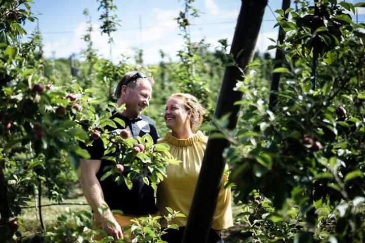 Hans Olav og Anne-Lene Bjerketvedt driver med økologisk epleproduksjon og pressing på Dyre gård.    Med sine 35.000 epletrær er de blant finalistene i Årets lokalmatgründer 2018. Alle foto: Benjamin Hernes Vogl