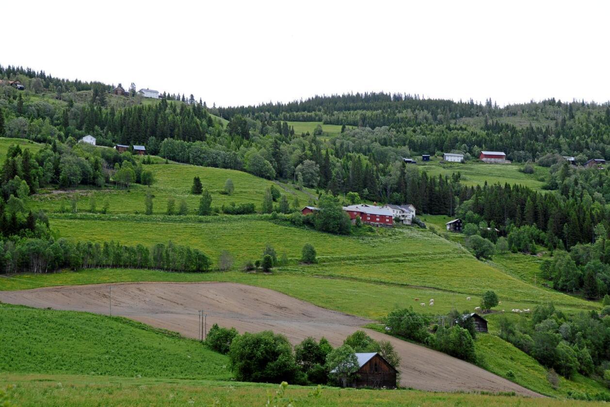 Matjord: Tre prosent av det norske landarealet er dyrka mark. Foto: Mariann Tvete