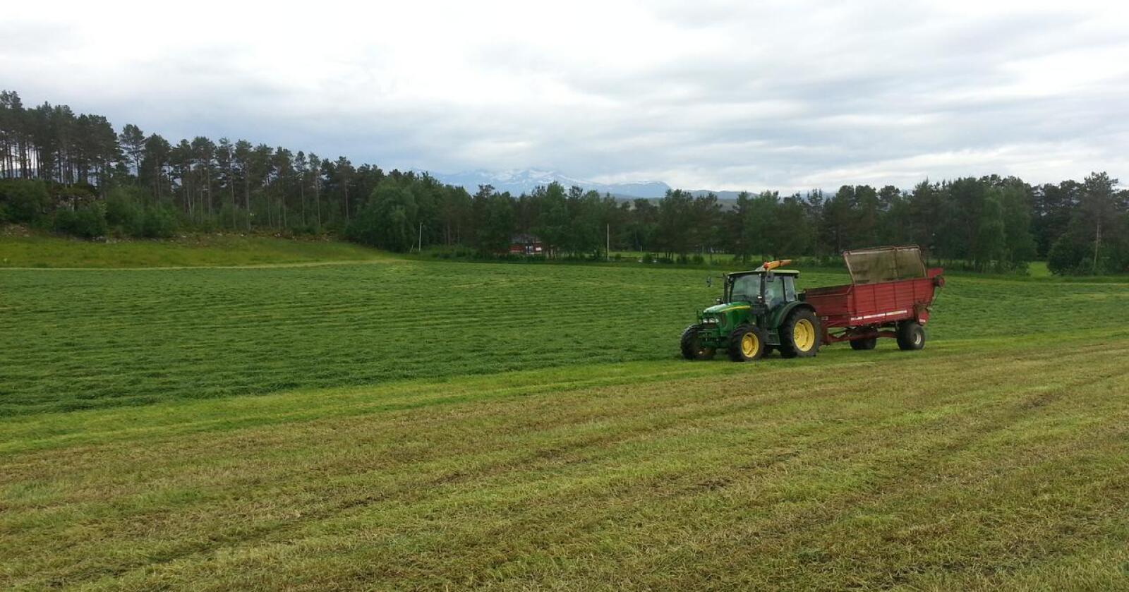 Lite korn: Norsk landbruk er først og fremst bygd på grasproduksjon. Foto: Privat