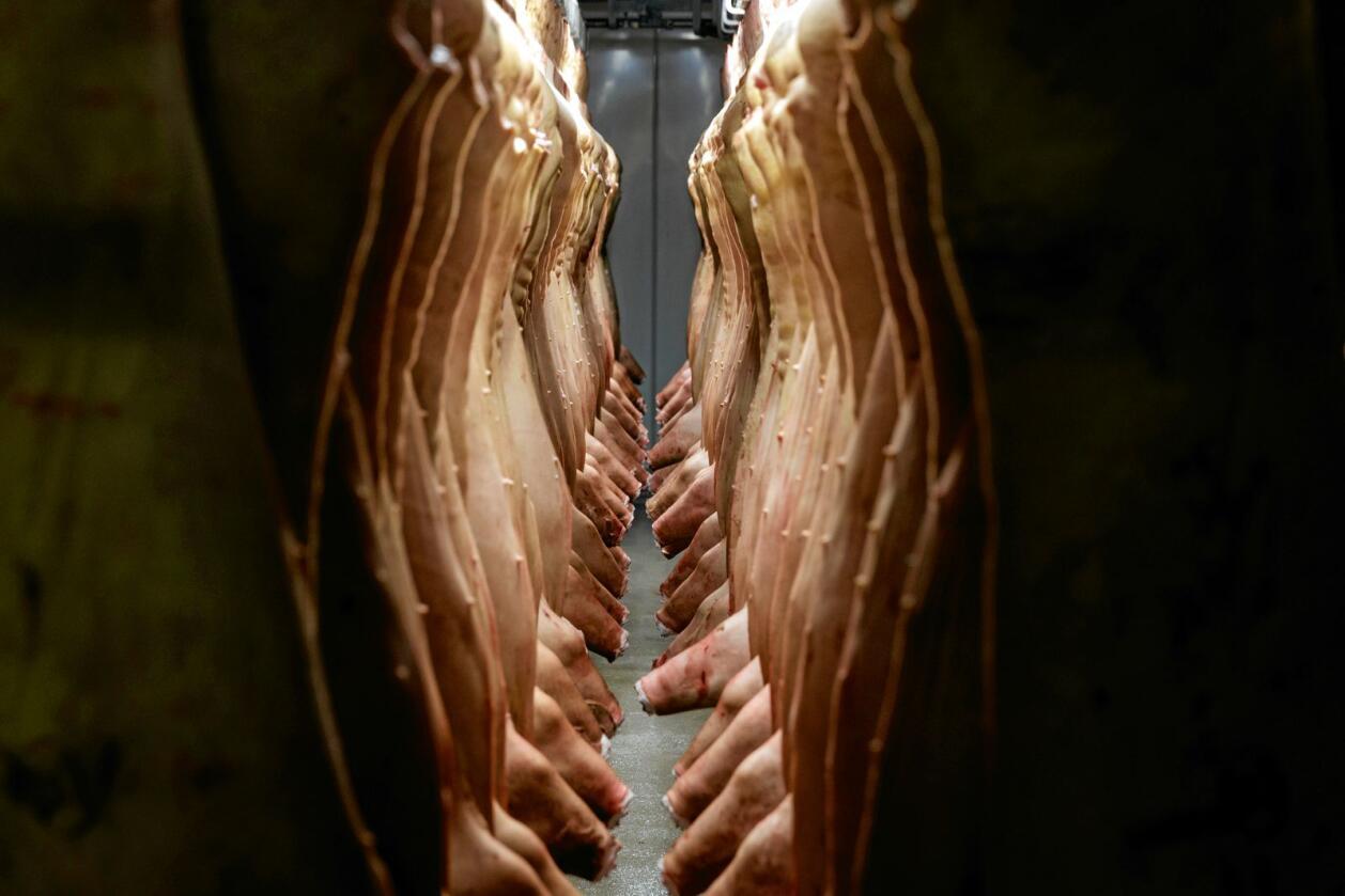 Avtalen innebærer blant annet mer import av svin. Illustrasjonsfoto: Cornelius Poppe / NTB scanpix