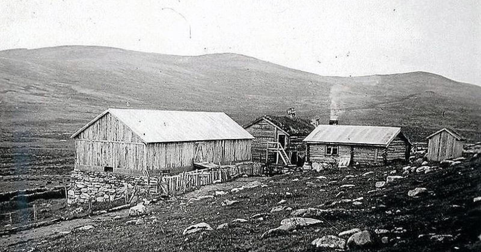 Lange tradisjoner. Setrene i Vesllie på Dovrefjell ble etablert i 1870-årene og er blant av de høyest beliggende setrene i landet. Her bilde fra Rolstadsetre i full drift for nesten 80 år siden. Foto: Privat