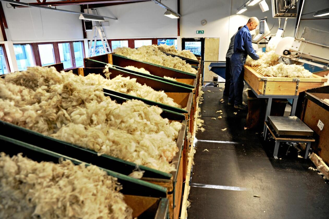 Bærekraft: Norsk ull kan gjerne være mer klima- og dyrevennlig enn importert økologisk ull. Her fra Norilias ullstasjon på Gol. Foto: Mariann Tvete