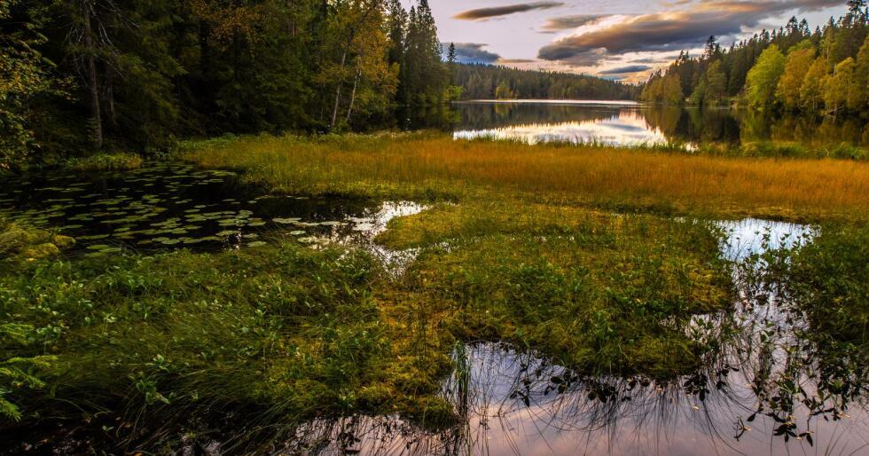 Illustrasjonsfoto: Halvard Alvik / NTB scanpix