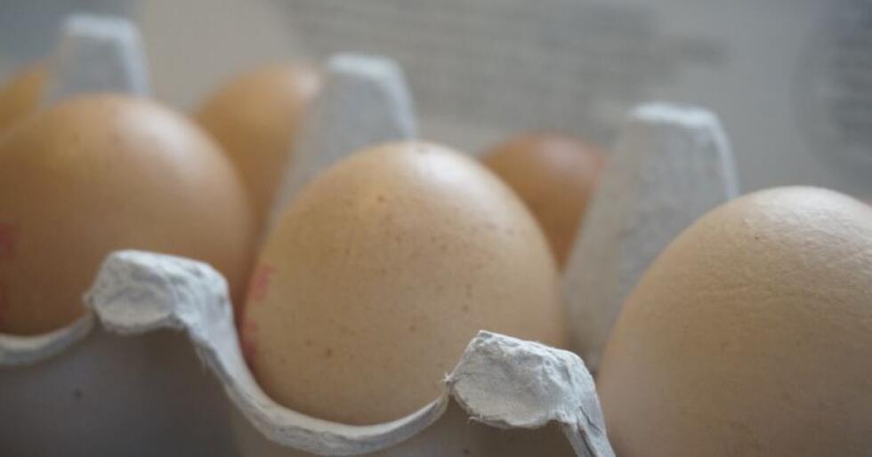 Brune egg frå frittgåande høns. Illustrasjonsbilete. Foto: Mariann Tvete