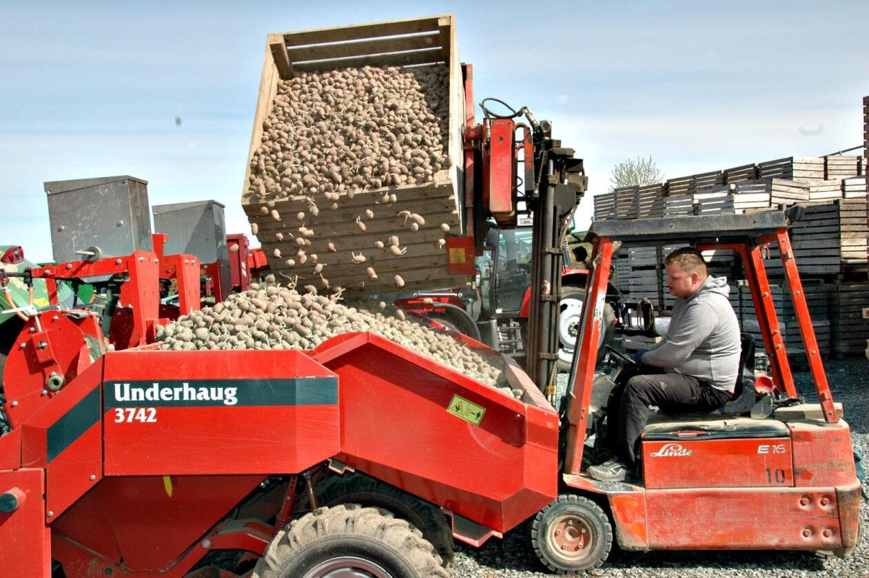 Nye settepoteter: Bjarne Saltvik Faanes fyller potetsetteren før kursen settes mot jordet. I år har han kjøpt nye settepoteter til 300 mål, og ingen settepoteter er eldre enn ett år.