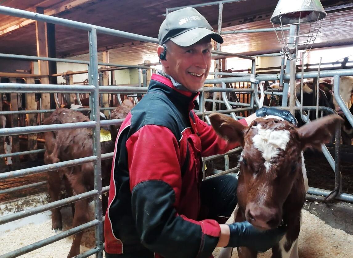 Trond Brendryen (58) teller på knappene om han skal gi seg som melkeprodusent. Her er han med kalven Kongen, som så dagens lys på 17. mai. Foto: Aud Brendryen.