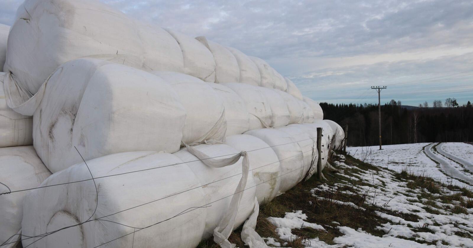 Etter tørkesommeren 2018 ble det importert drøyt 10.000 tonn med gras fra land i Øst Europa der det er påvist afrikansk svinepest. Foto: Dag Idar Jøsang