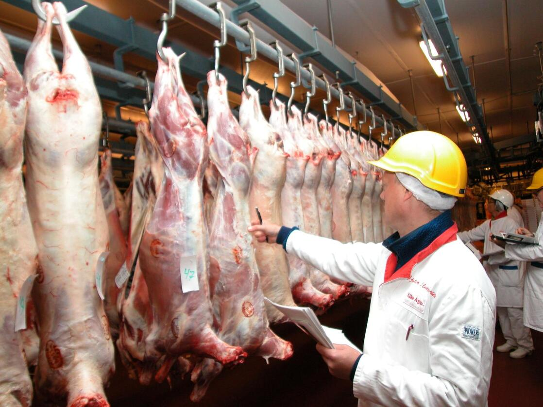 Lammeslakt: Her ser vi inspeksjon av lammeslakt på Gildes slakteri i Stavanger.