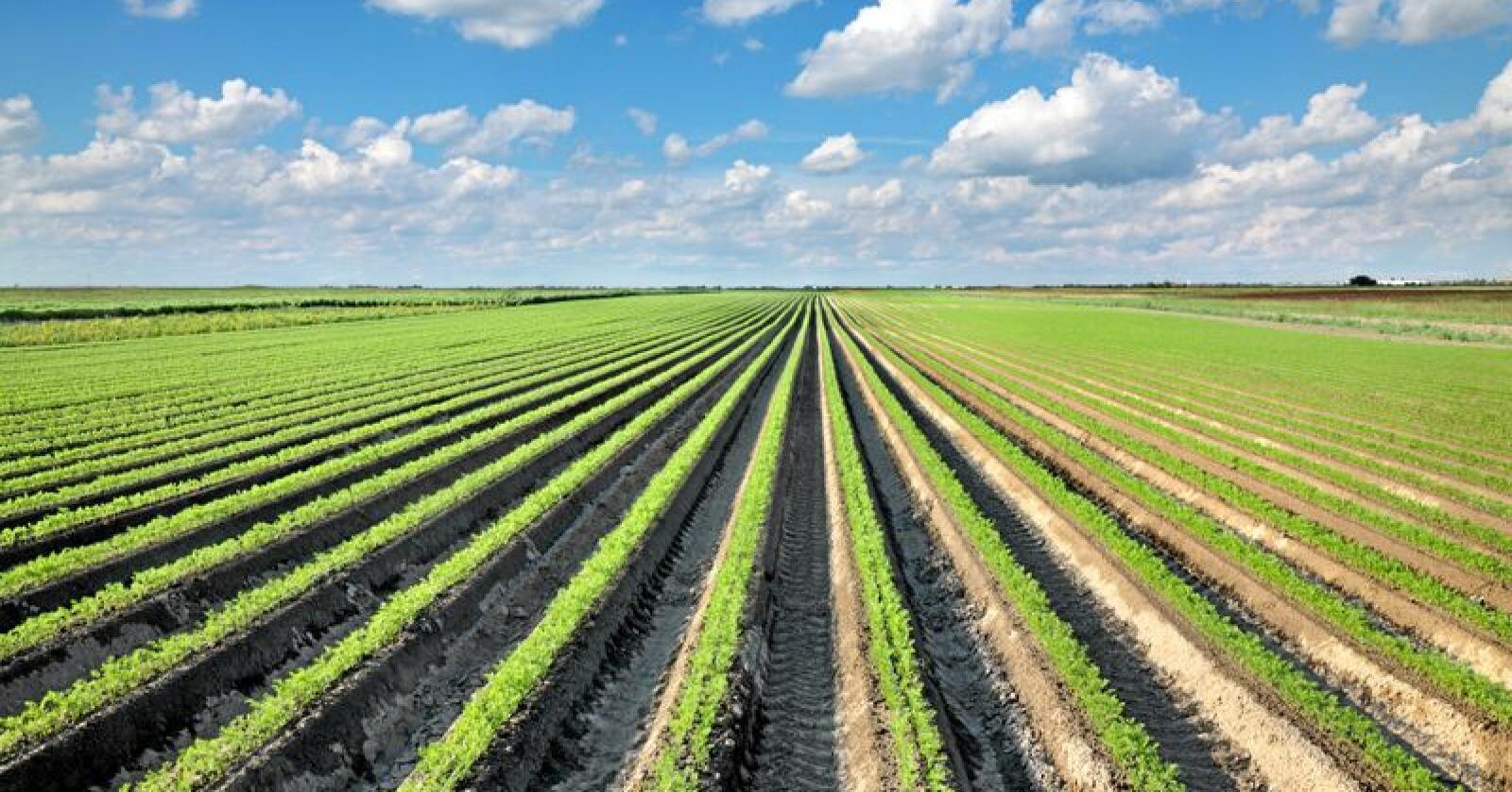 Næringsinnhold: Måten vi behandler jorda vi dyrker maten vår i påvirker innholdet av vitaminer og mineraler i maten. Foto: Simin Zoran / Mostphotos