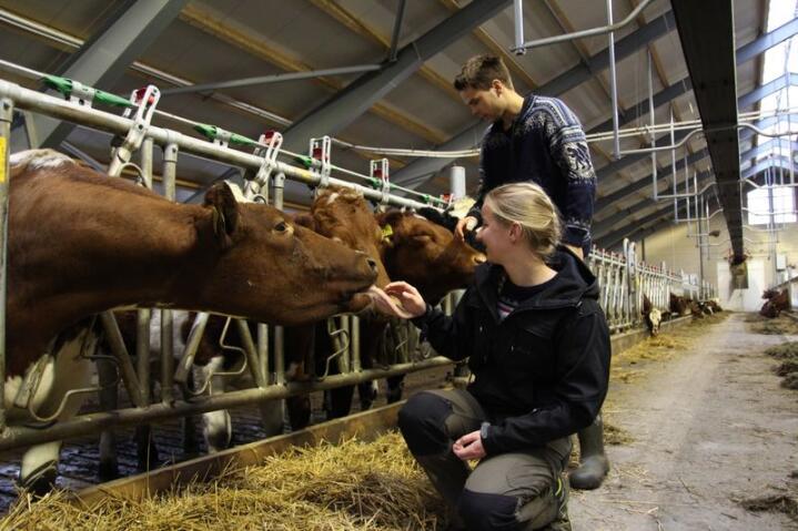 Camilla og Henrik Røed har bygget et splitter nytt melkekufjøs i heltre, til 15 millioner kroner. Foto: Kristin Bergo