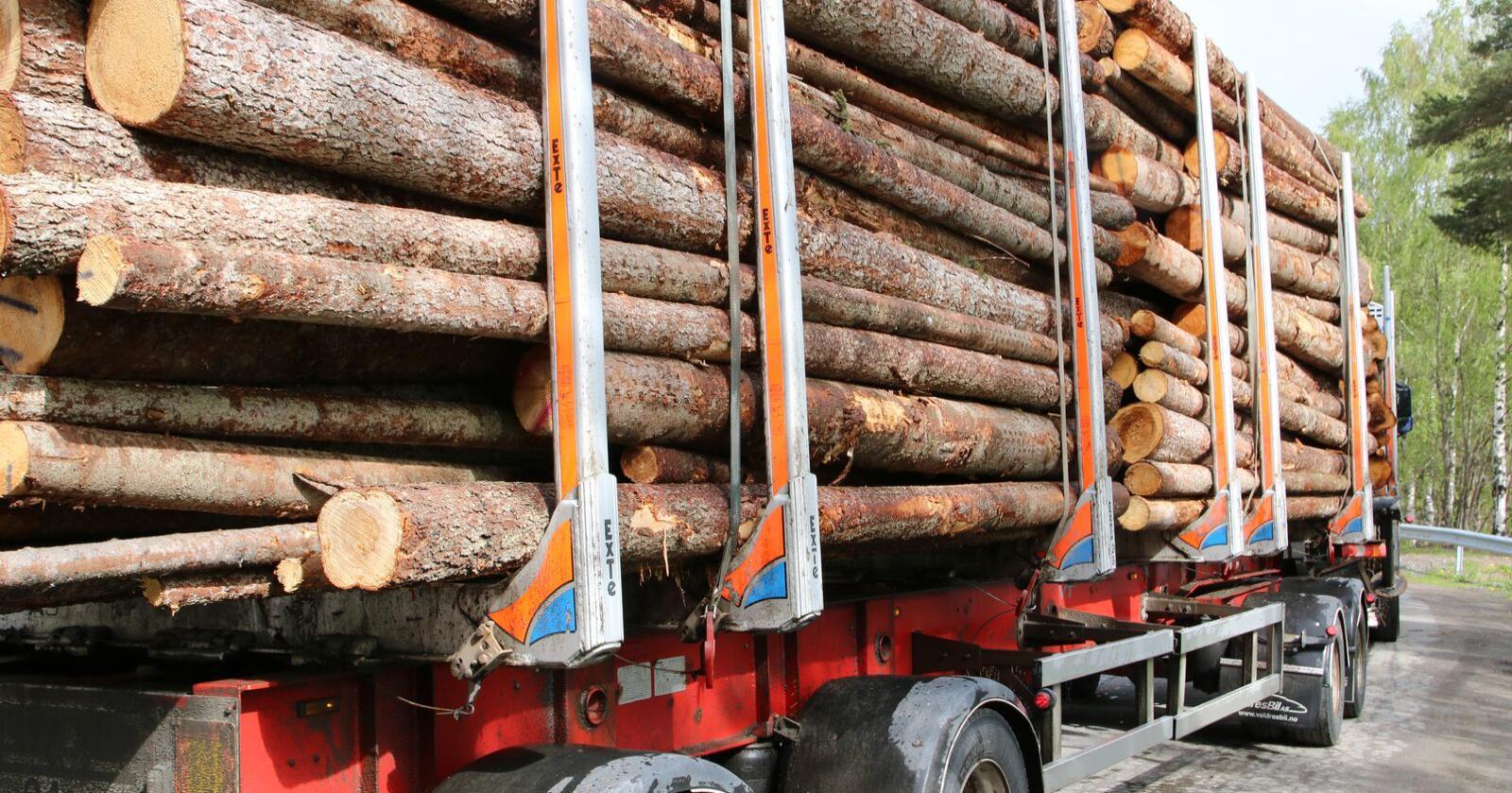 Aldri før har det blitt avvirket så mye tømmer i landet som i 2019. (Foto: Karl Erik Berge)