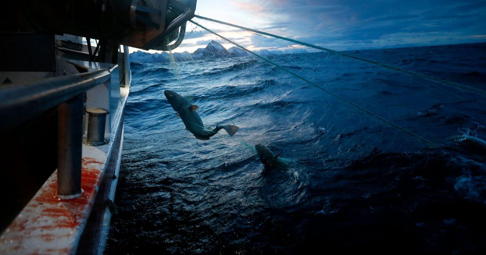 Torskefisket i nord er blitt en verkebyll i forholdet mellom Norge og EU etter brexit. Dette bildet viser fiskere utenfor Senja. Foto: Cornelius Poppe / NTB