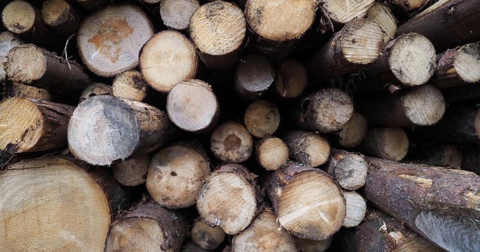 Statens vegvesen førebur ei prøveordning for tømmervogntog med opptil 74 tonn i totalvekt. Foto: Siri Juell Rasmussen