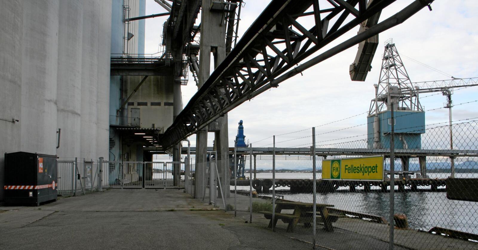 Klimaeffekt: Riving av beredskapslageret Stavanger Havnesilo, som er det største kornlageret i Nord-Europa, vil gi store klimautslepp. Berre produksjon av sementen i slike gigantanlegg gir utslepp som tilsvarar nær 10.000 personbilar, men når anlegget først står der startar ein livslang prosess der betongen tar opp og lagrar CO2. Foto: Bjarne Bekkeheien Aase
