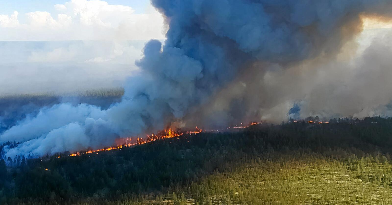 Eksperter mener varmen og skogbrannene i Sibir er verre enn normalt på grunn av klimaendringer. Foto: Luidmila Yagovitina / Mostphotos