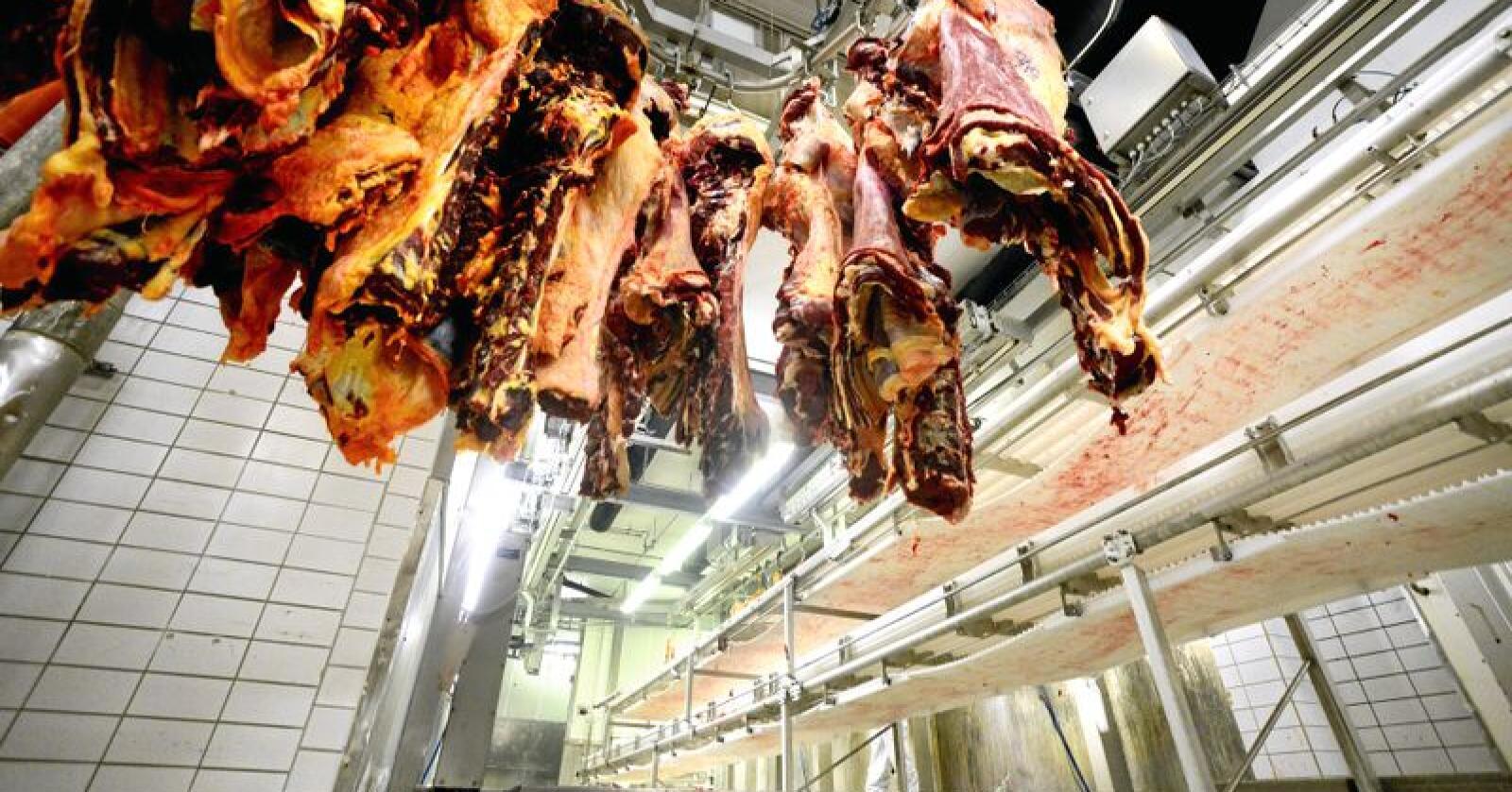 Katastrofe: Med dagens kjøttforbruk spiser vi oss mot katastrofe, skriver innsenderen. Foto: Siri Juell Rasmussen