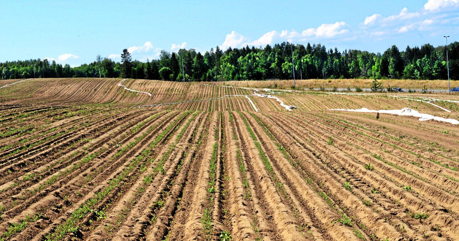 Prosjektet skal vurdere risikoen av å importere grovfôr, og er delt opp i fire: fôr, dyrehelse, plantehelse og biologisk mangfald. Arkivfoto: Siri Juell Rasmussen