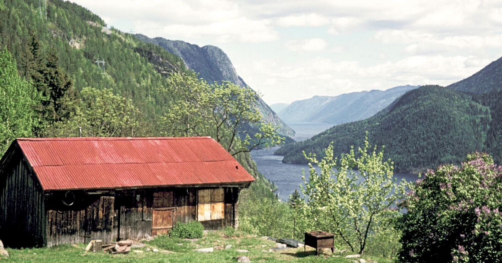 Dette er gården søskenparet Gurine og Ingerine levde hele sitt liv på. Dette bildet er tatt i 1974. Foto: Kjetid Vistad/NIBIO