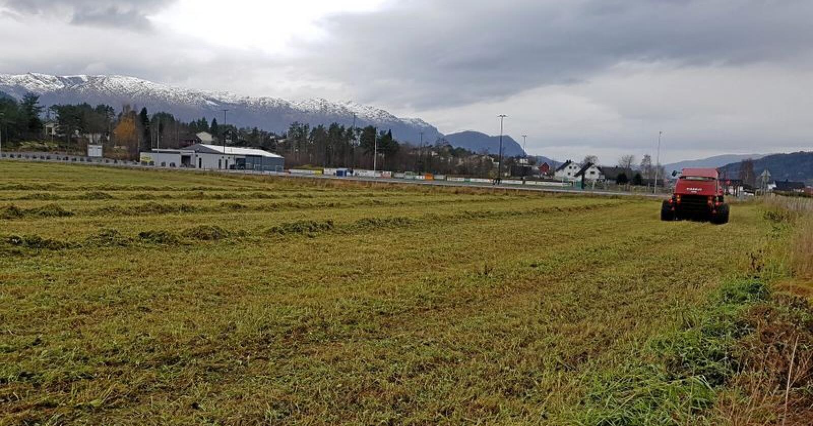 8. november, under snøkledde fjell, er det ikkje vanleg at det blir slått gras ved Kleivedammen på Sandane. Sesongen 2018 er ikkje som andre sesongar. Foto: Knut-Ove Henden