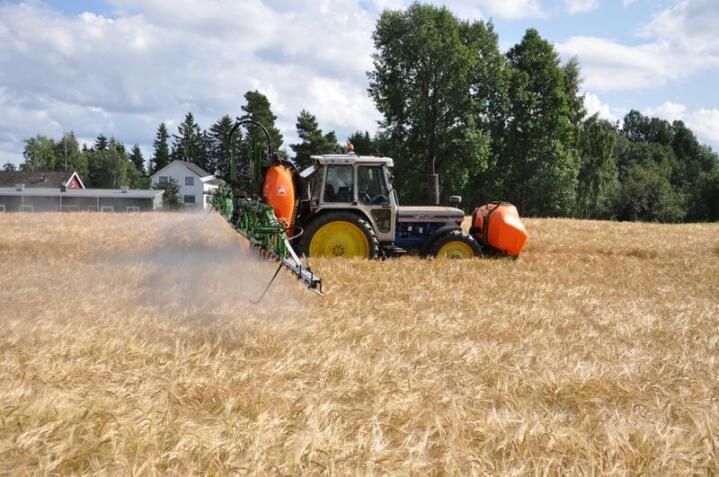 Bloggeren Sarah Pope påstår av hvete har blitt giftig som følge av tvangsmodning med glyfosat.
