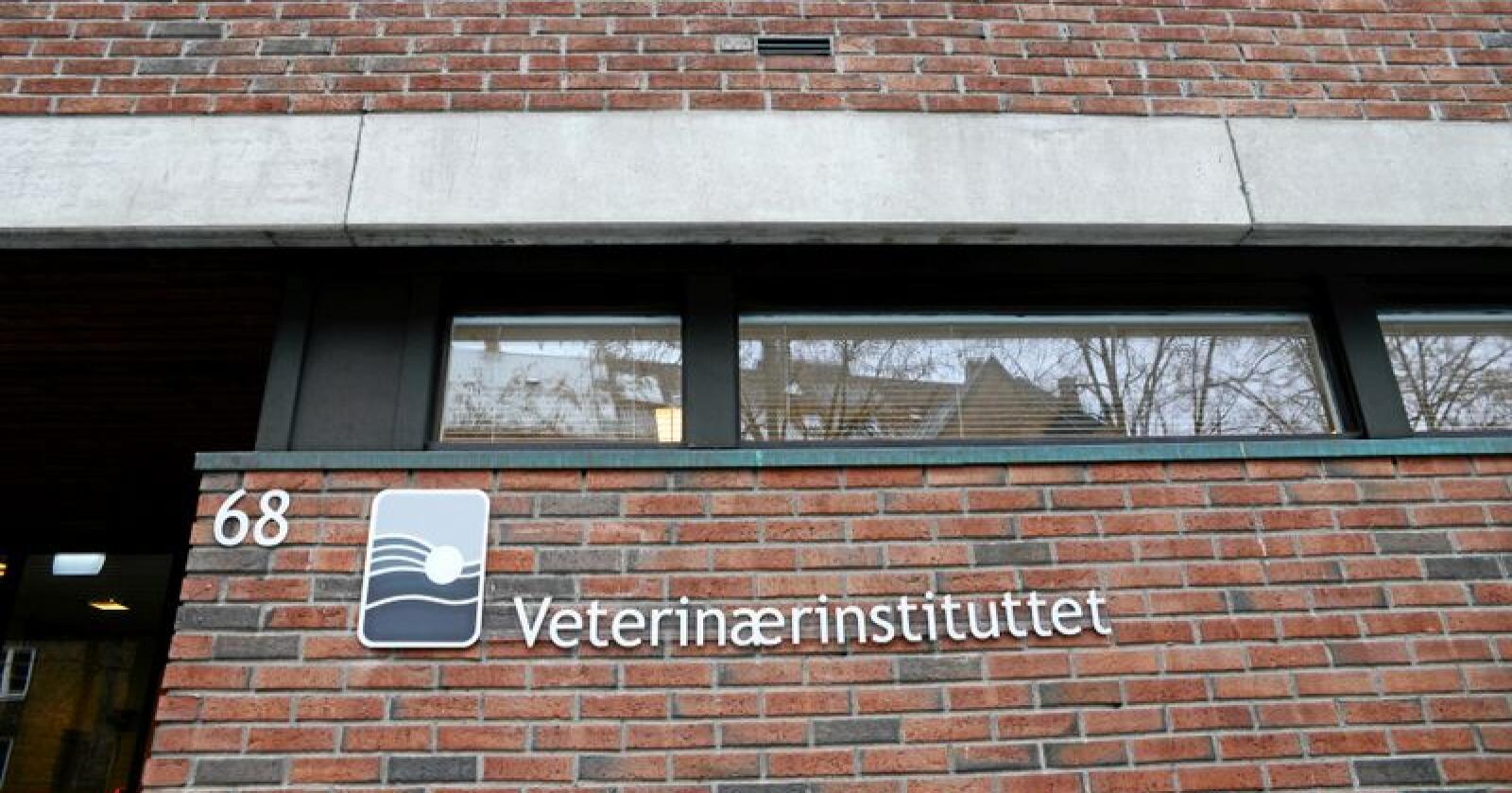 Veterinærinstituttet har gitt 13 personer om varsel om oppsigelse. Foto: Mariann Tvete