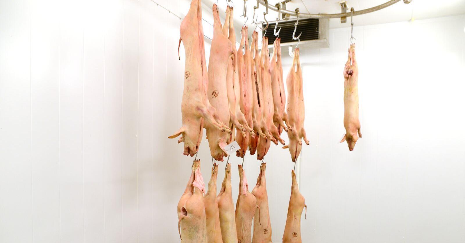 Amerikanerne frykter nå at trenden med stengte slakterier, kan føre til at de må eksportere mer kjøtt. Bildet er tatt på Det lille slakteriet på Lillehammer. Foto: Mariann Tvete