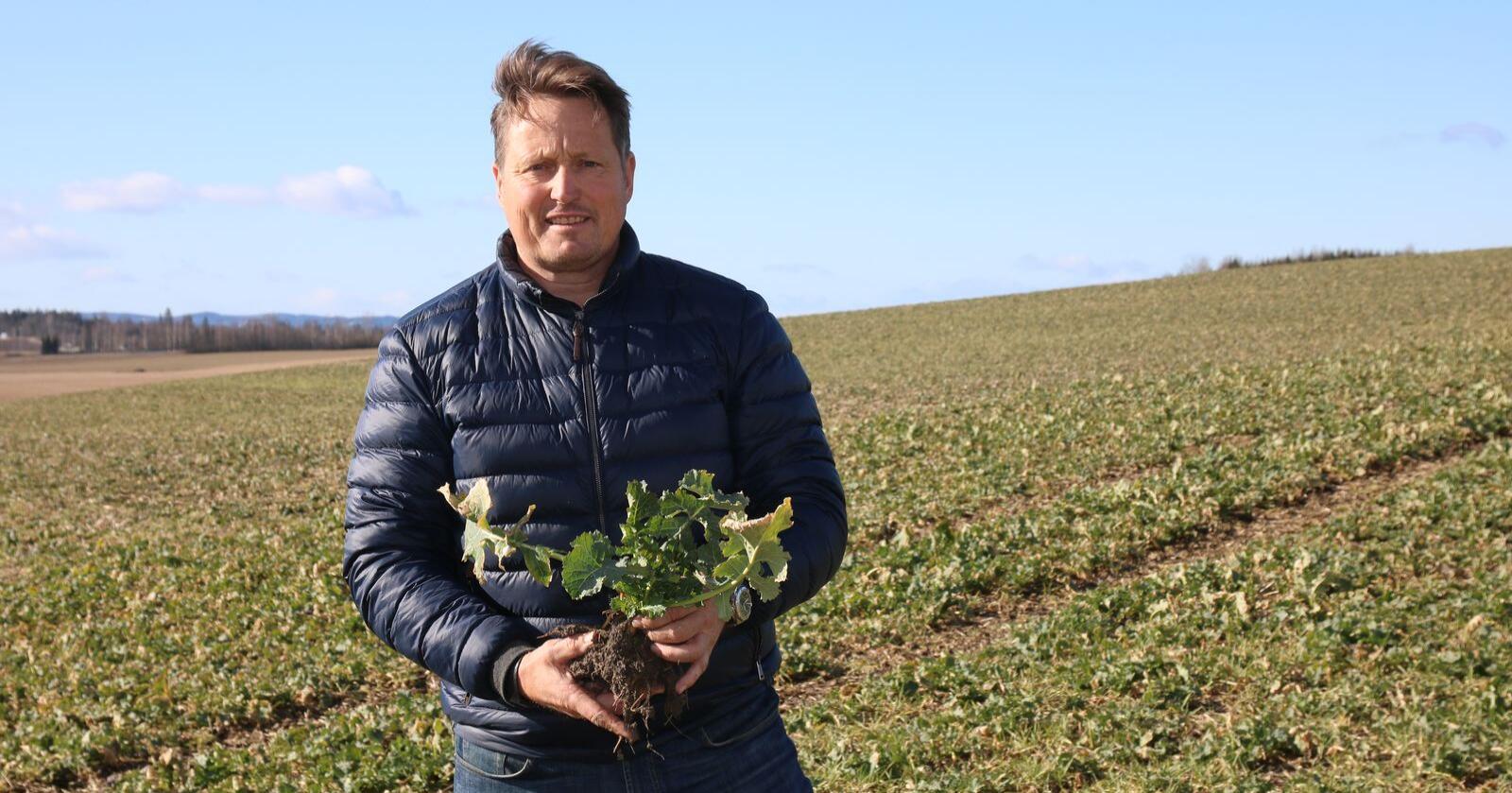 Høstraps: Håkon Huseby sår høstraps på om lag 600 dekar hvert år. Veksten har et rotsystem som er fint for jorda, og er dessuten en proteinvekst som bidrar til å redusere soyaimporten. Foto: Lars Olav Haug