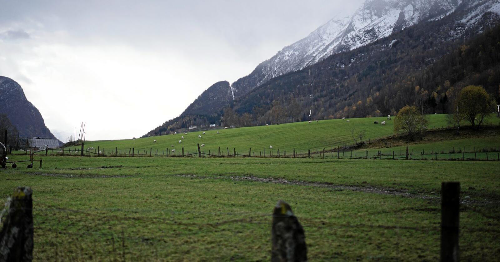 Grønt: Landbruket og matproduksjonen i Norge har plass til mange flere. Dette er grønne arbeidsplasser, skriver innsenderne. Foto: Benjamin Hernes Vogl