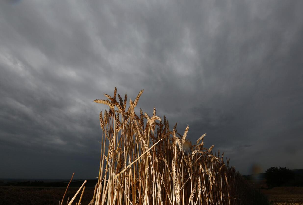 Franske bønder melder om elendige avlinger. Her fra Strasbourg tidligere denne uka. Foto: Vincent Kessler / Reuters / NTB scanpix