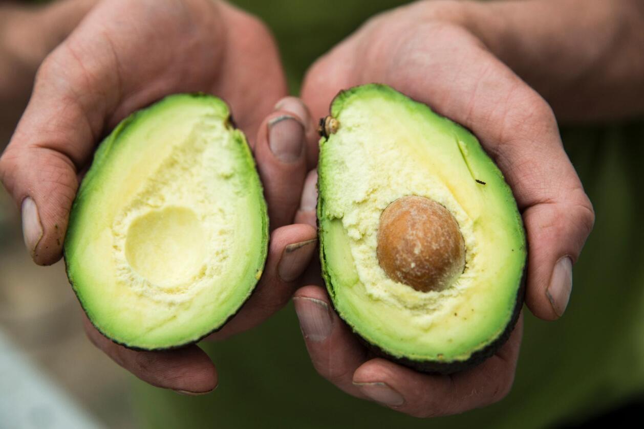 Tyveri: Avokado er en etterspurt vare verden over. I New Zealand har stadig flere kriminelle forsøkt å møte etterspørselen. Foto: Berit Roald / NTB scanpix