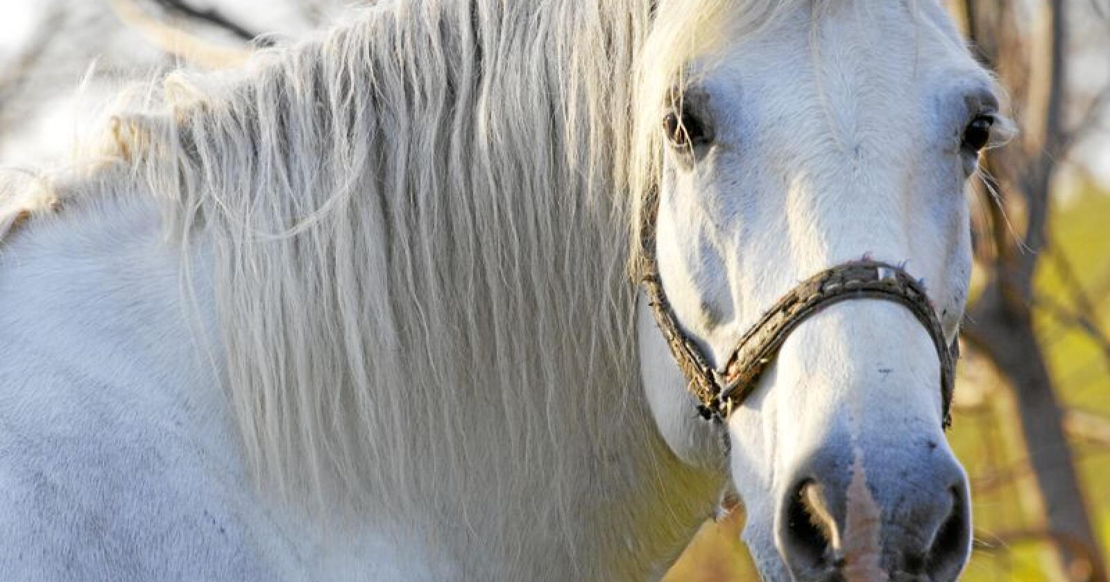 Fem måneder etter hesteklinikken ved NMBU Veterinærhøgskolen åpnet igjen etter salmonella-utbrudd, har den på ny oppdaget salmonella på klinikken. Illustrasjonsfoto: Colourbox